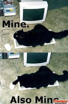 mine also mine funny cats