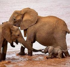 Animal world week photography selection - Page 2 of 22 - Gloria Love Pets Elephants Never Forget, Save The Elephants, Baby Elephants, Baby Hippo, Cute Baby Animals, Funny Animals, Wild Animals, Nature Animals, Elephant Photography