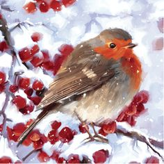 Winter robin Christmas cards