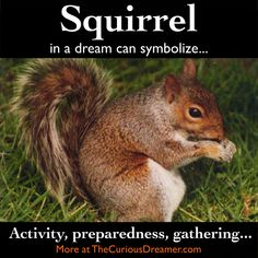 The Curious Dreamer's Dream Dictionary: How to Interpret Dream Symbol Meaning for Personal Growth Symbols And Meanings, Tarot Card Meanings, Dream Dictionary, Dream Symbols, Dream Meanings, Animal Symbolism, Dream Interpretation, Lucid Dreaming, Squirrel