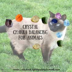 Crystal Chakra Healing for Animals