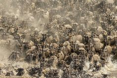 They are all entries for the natural world and wildlife categories in the 2017 Sony World Photography Awards - the world's largest photography competition. Award Winning Photography, Photography Awards, Tsitsikamma National Park, Photos 2016, Photography Competitions, World Photography, Natural World, Nature Photos, Animals Beautiful