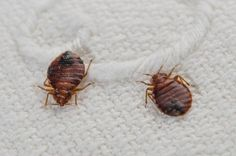 Learn how to handle laundry properly after a bed bug infestation to prevent reinfestation especially in a communal laundry room or laundromat.
