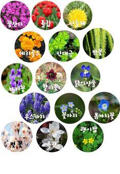 [봄과 동식물]교구제작,다운로드▶ 봄꽃 색상환 수조작 교구 만들기 : 네이버 블로그