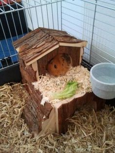 Two Story Cabin for Dwarf Hamsters or Guinea Pigs