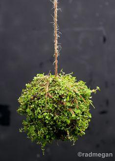 String Garden DIY