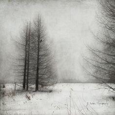 Jamie Heiden - Artistic Photography
