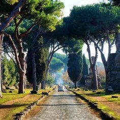 Pines along the Via Appia Antica