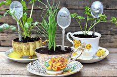Stamped spoon used as plant marker, vintage tea cup, and herbs. Great mothers day or friends gift.