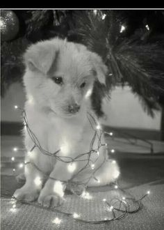 He sits under the Christmas tree with no light soon enough the lights off the tree fall down on him an amazing  Moment begins