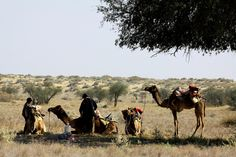 CAMEL SAFARI in JAISALMER ... Pictures from a 2 Day / 1 Night Camel Safari. *** Click image for entire Photo Set
