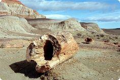 El bosque petrificado Jaramillo está considerado uno de los yacimientos fósiles más importantes de la Argentina.