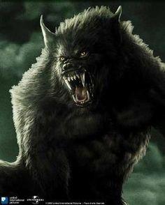 My novel, PAIN KILLER..Voraz Capio can shift into a vicious Dakorran wolf, when taking out creeps
