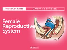 The Female Reproductive System