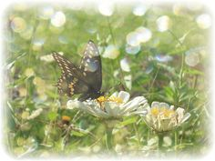Home Decor Fine Art Yellow Butterfly at the by ChaiseLongueGallery, $8.00