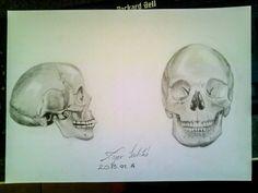scientific skull