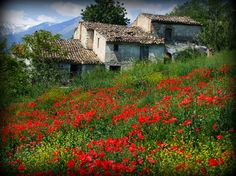 Old house in Abruzzo, Italy. David and Pauline Brenner from in Abruzzo Spring In Italy, Beautiful World, Beautiful Places, Beautiful Flowers, Places To Travel, Places To Visit, Travel Destinations, Regions Of Italy, Visit Italy