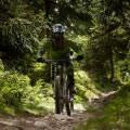 Bike Herbst XXL 7 Nächte Trunks, Plants, Summer Vacations, Autumn, Drift Wood, Tree Trunks, Plant, Planets