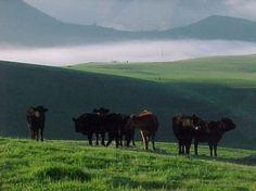 Tres Pinos California   california ranches for sale