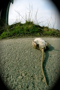 se faire chier comme un rat mort à la campagne