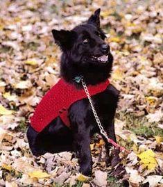 Leisure Arts - Knit Dog Coat ePattern, $2.99 (http://www.leisurearts.com/products/knit-dog-coat-epattern.html)