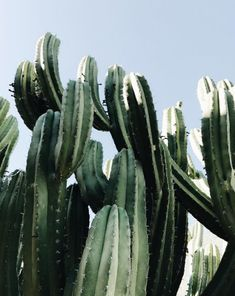 Cactus Photo by Candice Cheung. 372573821