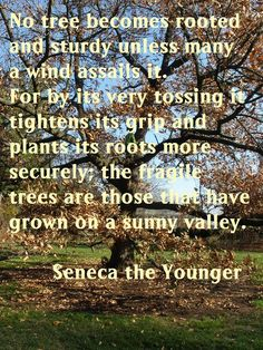 No tree becomes rooted and sturdy unless many a wind assails it. For by its very tossing it tightens it's grip and plants its roots more securely, the fragile trees are those that have grown on a sunny valley.  -Seneca the Younger (other family quotes also on webpage)
