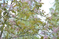 Pieni Lintu: Onnea on... Spring Photos, My Spring