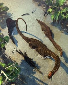 Apatosaurus (used to be considered synonymous with Brontosaurus): Jurassic (152 – 151 Ma): Sauropoda: Discovered by Marsh, 1877: Artwork by Kurt Miller