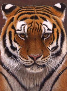 JP81 Intense Siberian Tiger