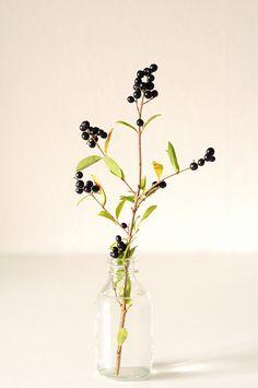 Berries. lol i remember