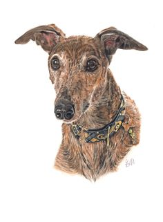 Greyhound pet portrait painting in pastels Greyhound Art, Italian Greyhound, Greyhound Pictures, Grey Hound Dog, Dog Paintings, Beautiful Dogs, Dog Art, Animal Drawings, Pet Portraits