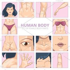 Female body parts in cartoon style. Human Icons