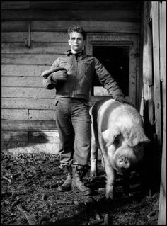 James Dean in Fairmont, Ind., on the farm of his uncle Marcus Winslow, posing with a pig. 1955