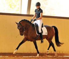 Adonis - German Riding Pony