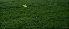 Žltý parazol v zelenej tráve