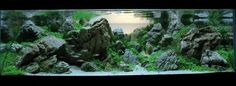 IAPLC2014   International Aquatic Plants Layout Contest - 2014 #IAPLC2014