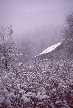 Snowy Goldenrod. 1850's cabin at Cabincove, Great Smoky Mountains, western North Carolina.