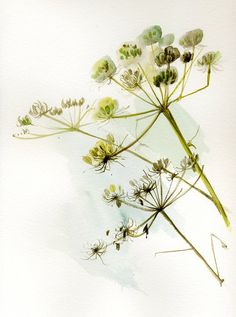 Giant Hogweed Dry Flower Fine Art print from original Watercolor Painting, delicate autumn painting, brown, sky blue, white, light green