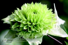 #petal & #flower #perfection