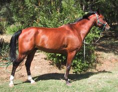 What's the Ideal Endurance Horse Conformation? By Michelle Roush DVM