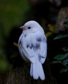 Such a pretty bird