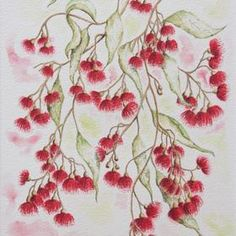 Pear fruited malee Australian bush flower - original art by Judy LaMonde for sale at http://www.artinvesta.com/artist/32. See Judy's online gallery or message her. This work is pen, ink, watercolour on German rag paper. Australia, flora, red, flowers, green, leaves, pink, outback, bush, botanical