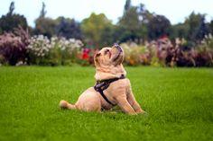 #dog #dogphotography #kutya #kutyafotózás #sharpei #kiskutya #kutyafotó #photo #photography #fotózás #fotó #margitsziget #pet #petphotography