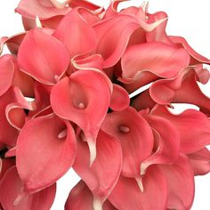 Lot of 60pc-coral Reef(david's Bridal Color) Real Touch Calla Lily ** Wow! I love this. Check it out now! (This is an amazon affiliate link. I may earn commission from it)