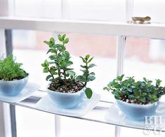 Create a garden in just a sliver of space! You probably never realized you had room for a garden here: indoors on a windowsill with eastern or southern exposure. Check out our tips on creating both a windowsill herb garden and a windowsill vegetable garden, including more plants that grow well in a sunny window. #indoorvegetablegardeningroom
