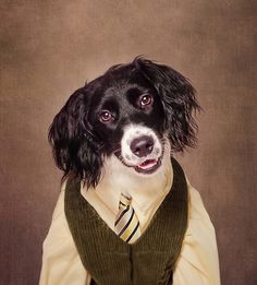 Shelter Pets Project - Cannonball #gifts on #Zazzle #fundraiser #charity #rescue #dogs #portrait #art #fashion #campaigh #shelterpetsproject #tammyswarek #photography