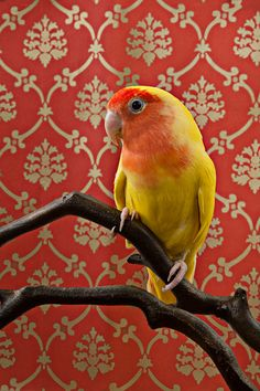 Claire Rosen's Whimsical Portraits Of Birds Photographed Against Vintage…