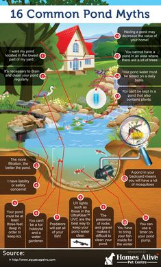 16 Common Pond Myths (infographic) #GardenPond