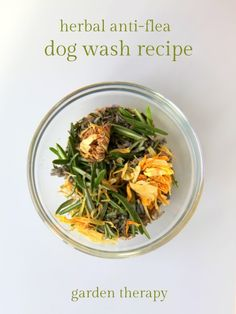 Healing herbs for homemade dog shampoo
